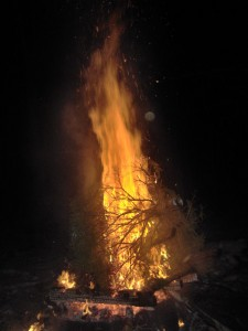 Tree Burn